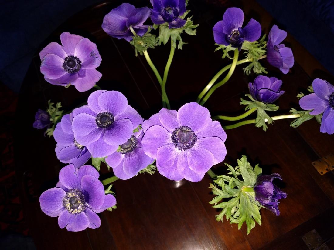 Easter violet I.jpg