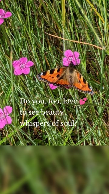 Do you, too, love 💕 to see beauty whispers of soul?