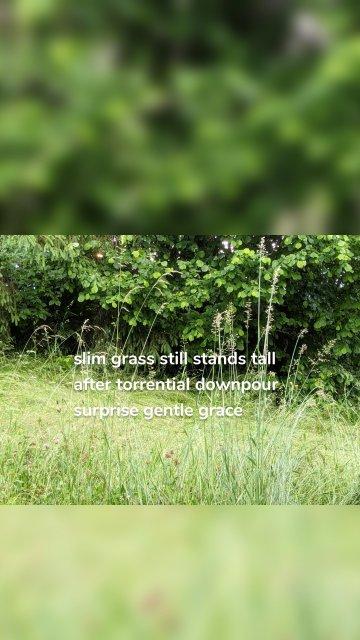slim grass still stands tall after torrential downpour surprise gentle grace